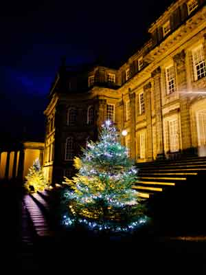 christmas-tree-appeal-1